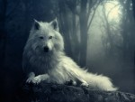 Wolf-wolves-29803359-1024-768